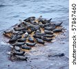 View on Grey Seal rookery, North-East of Scotland - stock photo