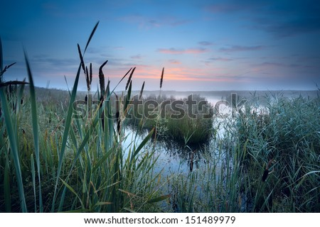 view on misty swamp at sunrise, Drenthe, Netherlands - stock photo