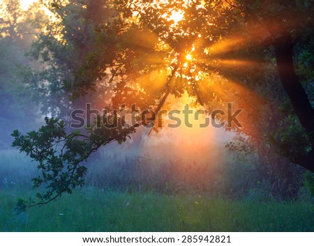 View on morning sunrise through trees - stock photo
