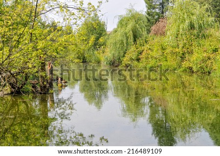 View on river with trees and bush growth on riverside and ducks against cloudy sky background. Moscow, Russia.