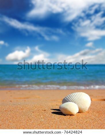 view on seashells on beach near sea - stock photo