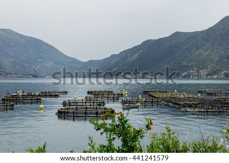 View on the fishing farm from the coast in the Bay of Montenegro - stock photo