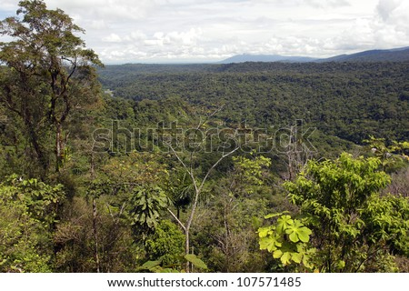 View over primary rainforest in the Ecuadorian Amazon - stock photo