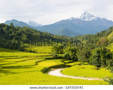 View over rice terraces to the looking Fishtail Mountain (Macchapuchchhare), from Purunchaur, outside Pokhara, Nepal - stock photo