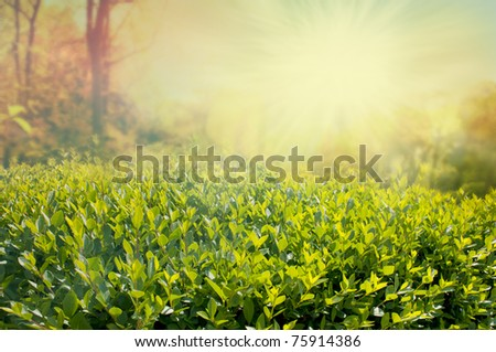 View over the hedge on  sunny day - stock photo