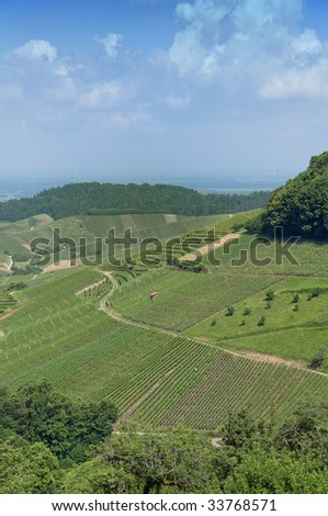view over vineyard with valley