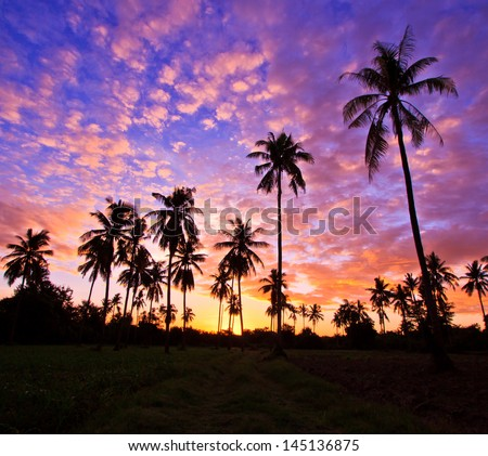 View silhouetted of coconut tree - stock photo