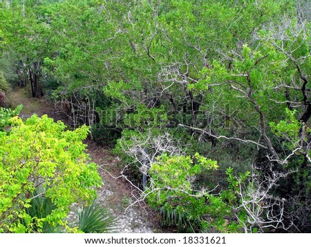 view south Florida wilderness landscape from above - stock photo
