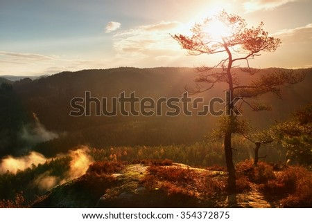 View through branches to deep misty valley within daybreak. Foggy and misty morning on the sandstone view point in national par - stock photo
