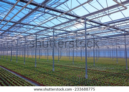 View through the greenhouse with rows of young plants in pots - stock photo