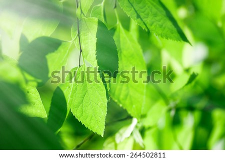 View through the leaves - look through the crown of the tree - stock photo