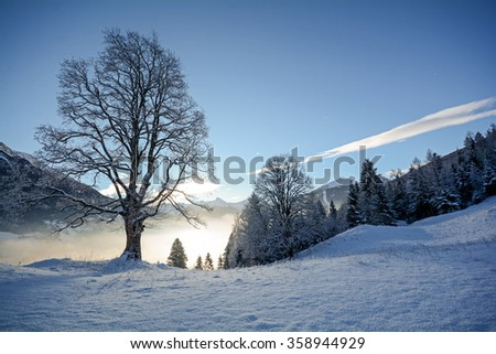 View to a winter landscape with old tree and valley near Bad Gastein, Pongau Alps - Salzburg Austria Europe - stock photo