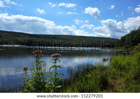 View to the mountain lake upstate ny at the summer time with grass and flowers at the foreground - stock photo