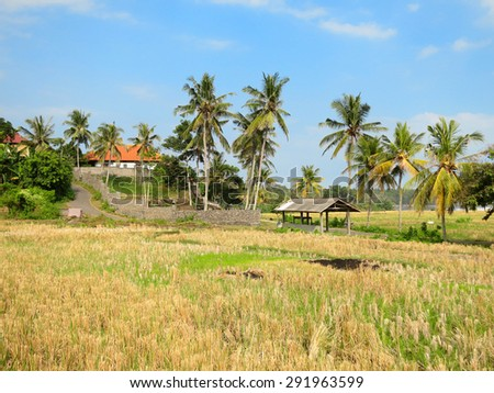 View to the rice field near Medewi beach, Bali, Indonesia