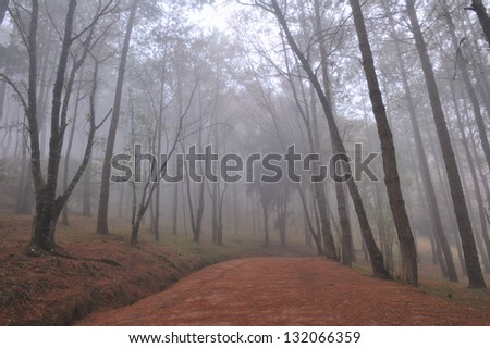 View trees in fog - stock photo