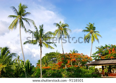 view with palms on Balinese resort - stock photo