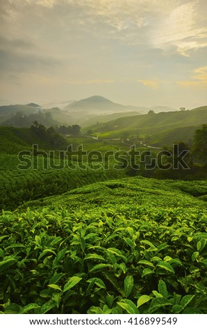 Viewpoint on the top of cameron highland, tea valley and sunrise in Malaysia.  - stock photo
