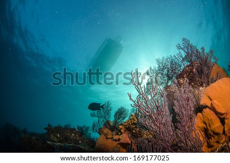 views from reefs of baja california - stock photo