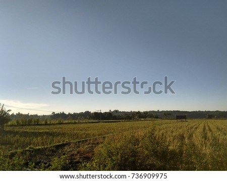 views of rice fields