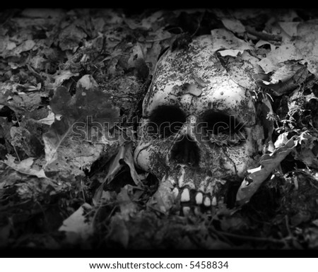 vignetted skull - stock photo