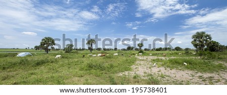village and livestock along the white nile in South Sudan, 180 degree panorama - stock photo