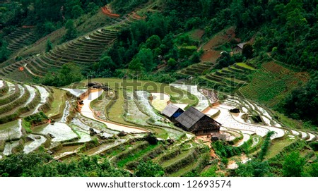 Village and Rice field curves - stock photo