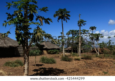 Village in Mozambique with papaya trees growing abound houses - stock photo
