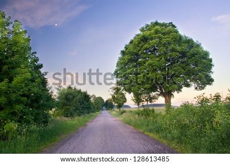 village road. landscape - stock photo