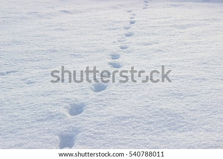 Village winter. Snow with traces of animals.