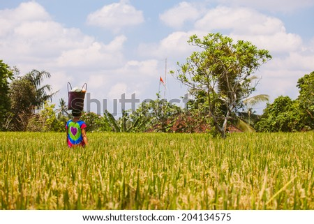 Village woman carry bag on your head in the rice field in Ubud, Bali, Indonesia - stock photo