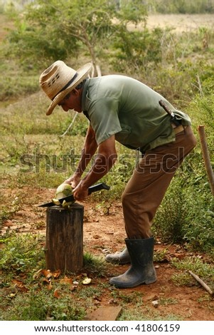 VINALES, CUBA - MARCH 20: Man chopping a fresh coconut in Cuban countryside in Vinales on March 20, 2009. Most Cubans live way below established poverty lines, the issue is biggest in rural areas - stock photo