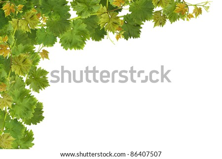 Vine leaf frame on white. - stock photo