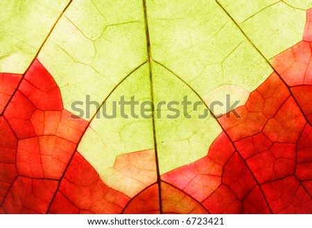 vine-leaf with fall-colouring, background detail - stock photo