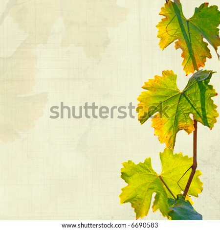 vine leaves grungy background - stock photo
