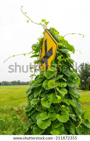 Vine leaves, weeds grew up and choked intersection traffic signs. - stock photo