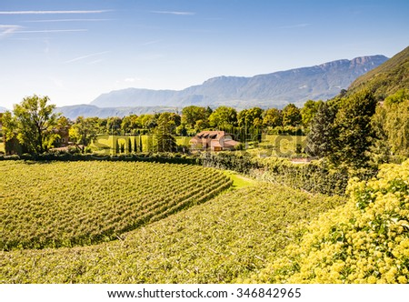 Vineayard at Bolzano (South Tyrol, Italy) - stock photo