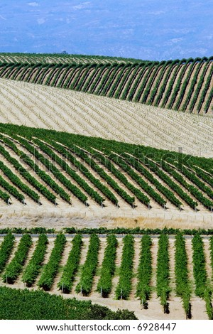 Vinery on the hills of Napa Valley, northern California - stock photo
