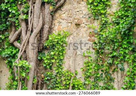 vines and other vegetation growing on an old stone wall - stock photo