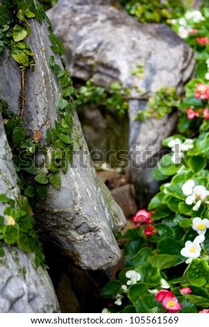 Vines growin accross rocks - stock photo