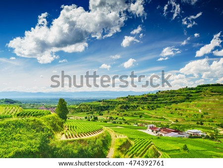 Vines growing on picturesque hilly countryside in Germany. Scenic summer landscape.