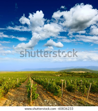 Vineyard and blue sky - stock photo