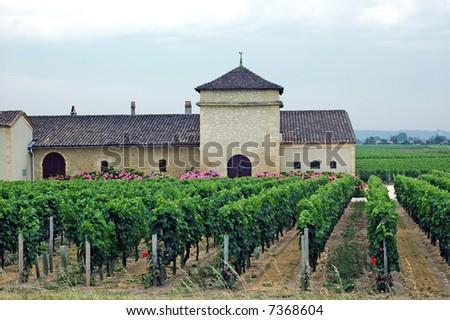 Vineyard and farm - house near Bordeaux (Aquitaine, France) - stock photo