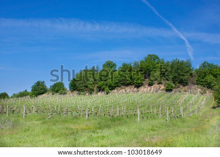 Vineyard and olive trees under bluse sky - stock photo