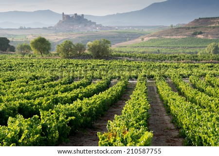 Vineyard and San Vicente de la Sonsierra as background, La Rioja (Spain) - stock photo