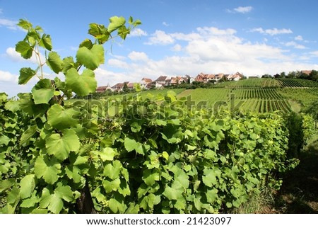 vineyard and village in france - stock photo