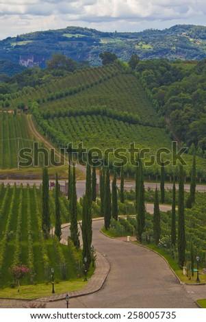 Vineyard at Bento Goncalves - rio Grande do Sul - Brazil - stock photo