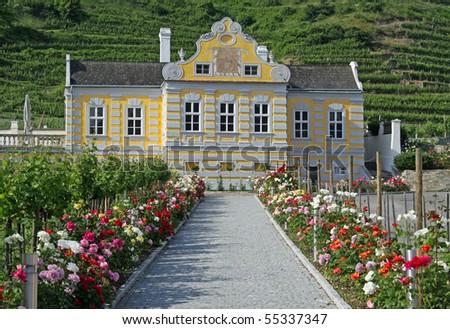 Vineyard at river Danube (Wachau, Lower Austria) - stock photo