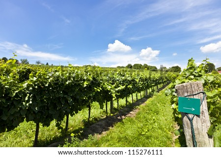 Vineyard at sunny day with blank sign for text additon of type of wine - stock photo