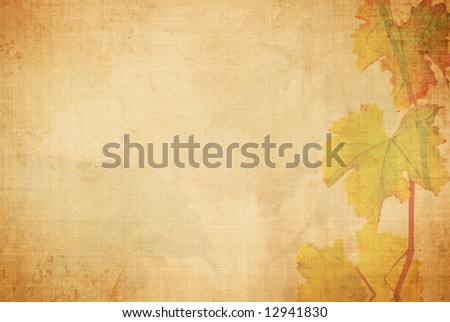 vineyard background - stock photo