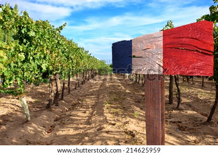vineyard cabernet sauvignon from France - stock photo
